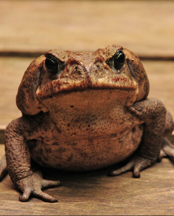 Reptiles, Amphibians and Insects