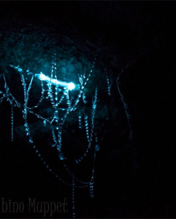 glow worm in cave, macro photography, new zealand