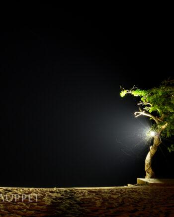 Single tree on sandy beach at night, African landscape photo, lake Malawi