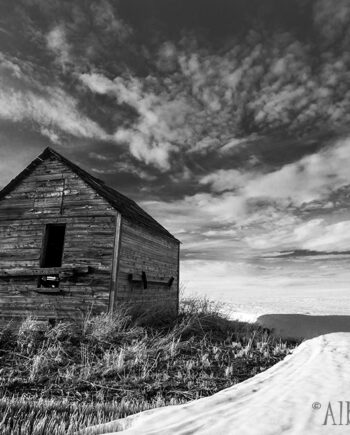 Old grain shed in snow covered field, Alberta landscape, black and white
