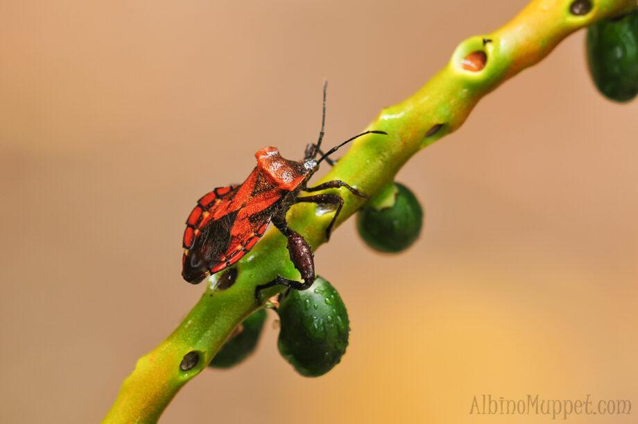 close up of orange beetle on branch